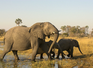 Photo: Wilderness Safaris, Chitabe Lediba