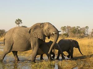 Photo: Wilderness Safaris, Chitabe Lediba