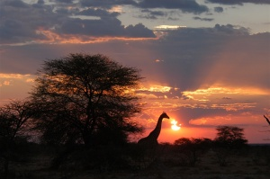 Photo: Onguma Game Reserve