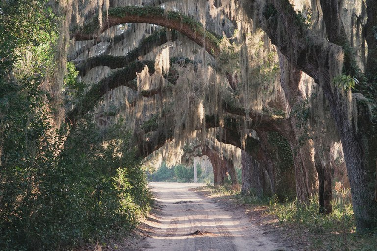 Photo: The Cumberland Island Conservancy, Inc.