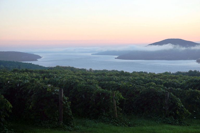 Photo: Visit Finger Lakes (Flickr: Sunrise overlooking a vineyard) [CC-BY-2.0 (http://creativecommons.org/licenses/by/2.0)], via Wikimedia Commons