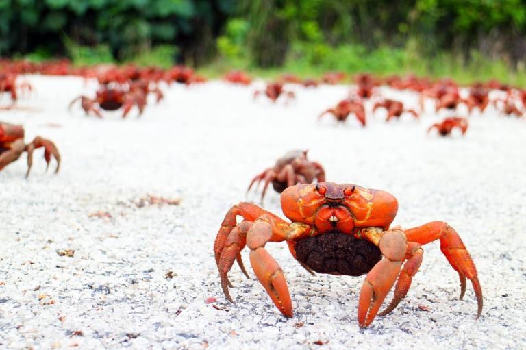 Photo: Christmas Island Tourism Association