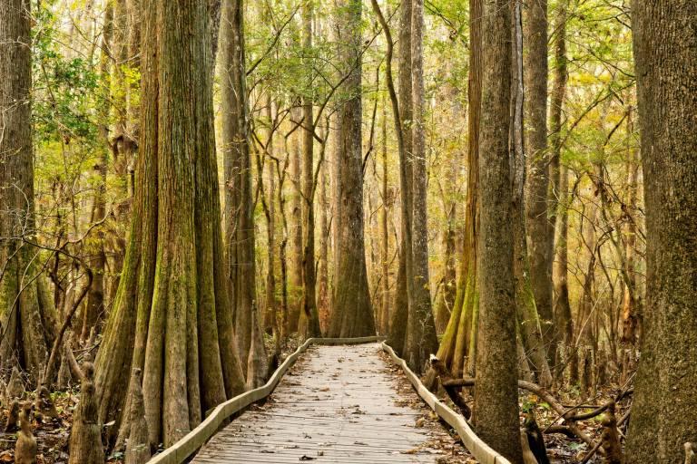 Photo: Congaree National Park, National Park Service