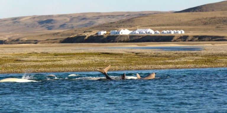 Photo: Arctic Watch