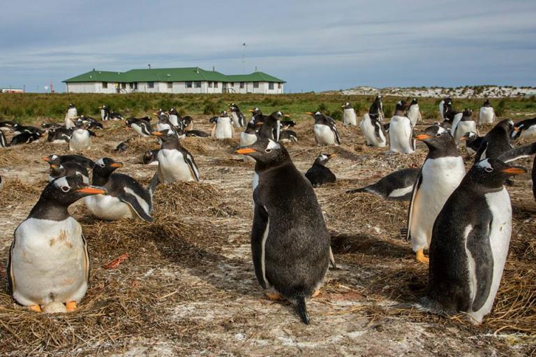 Photo: Nigel McCall, Sealion Island